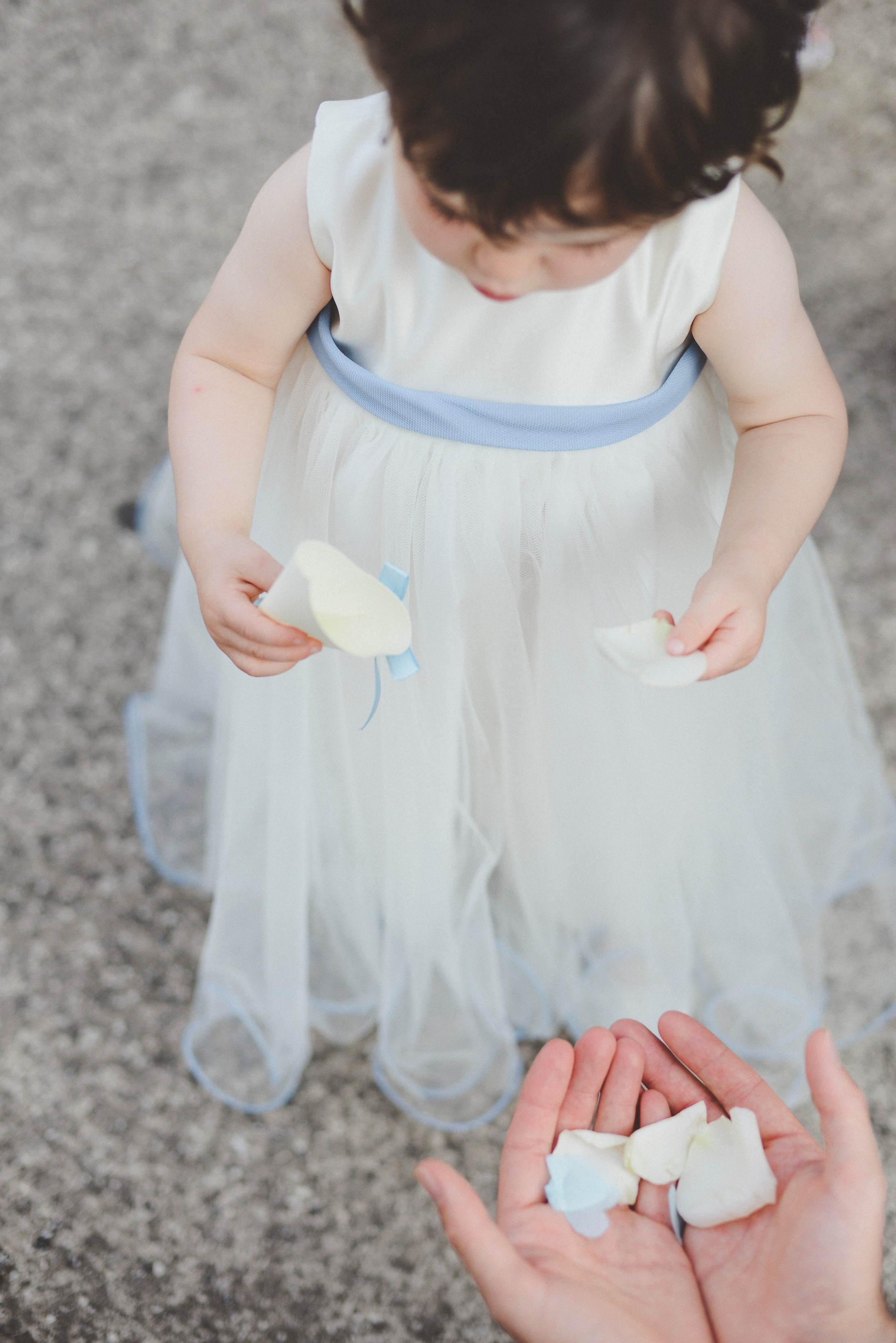 adriana alfano the flower girl takes some petals from two hands