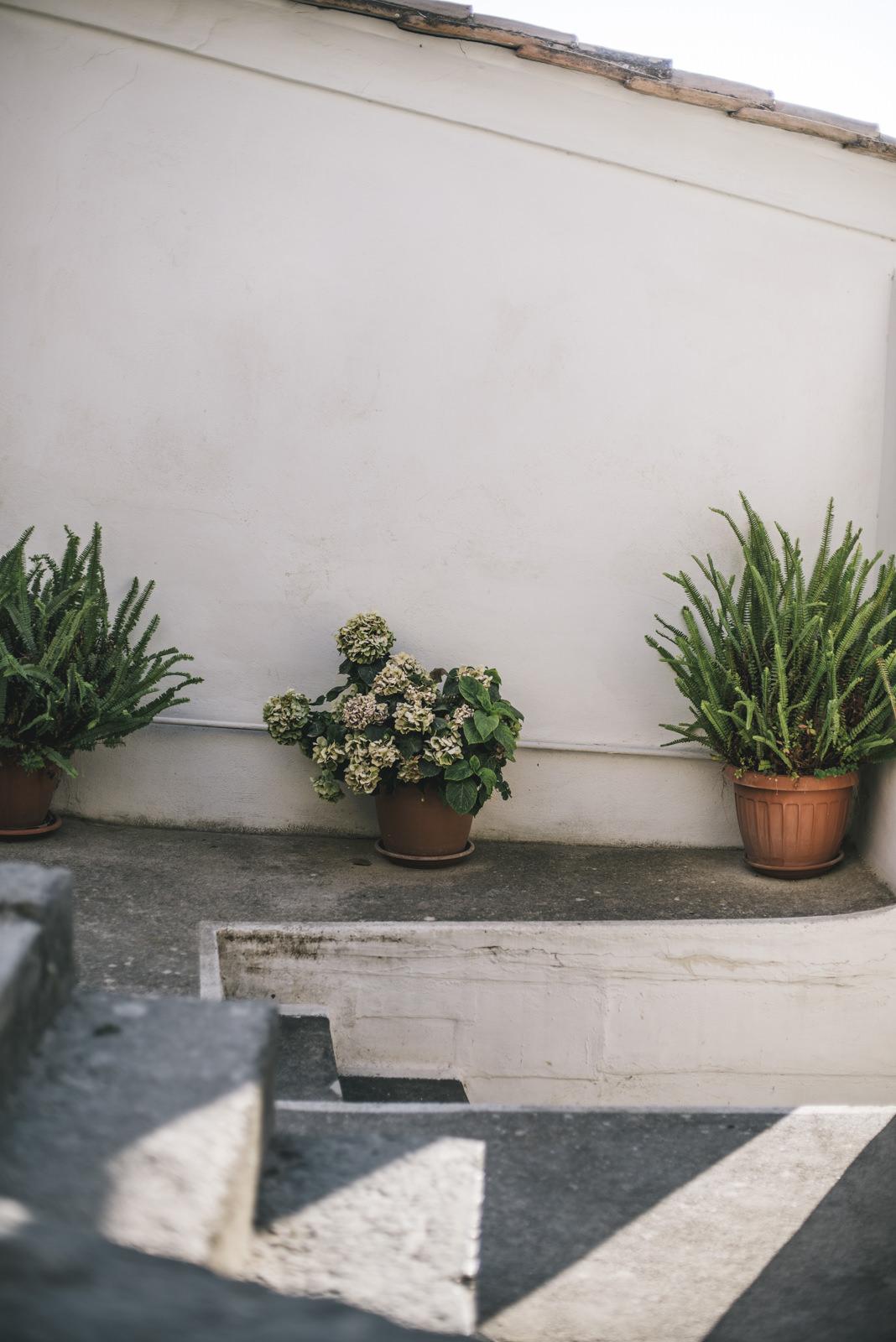pont plants