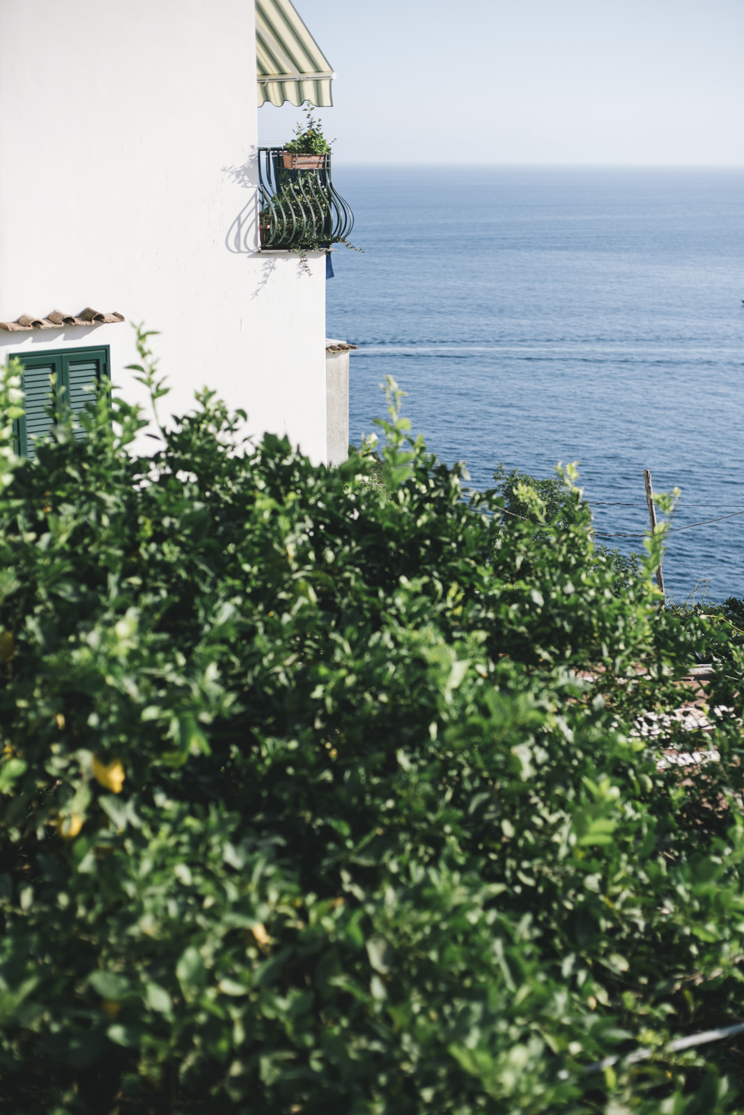 lemon trees and the sea