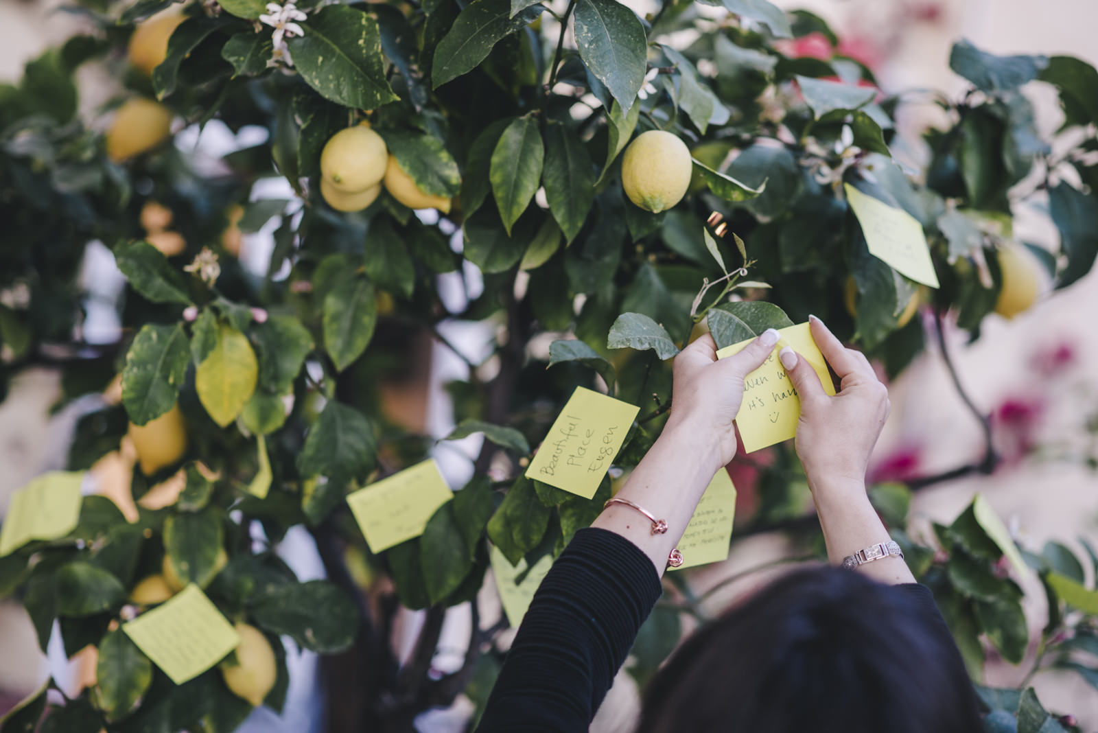 a wedding guest taking her placard from a lemon tree