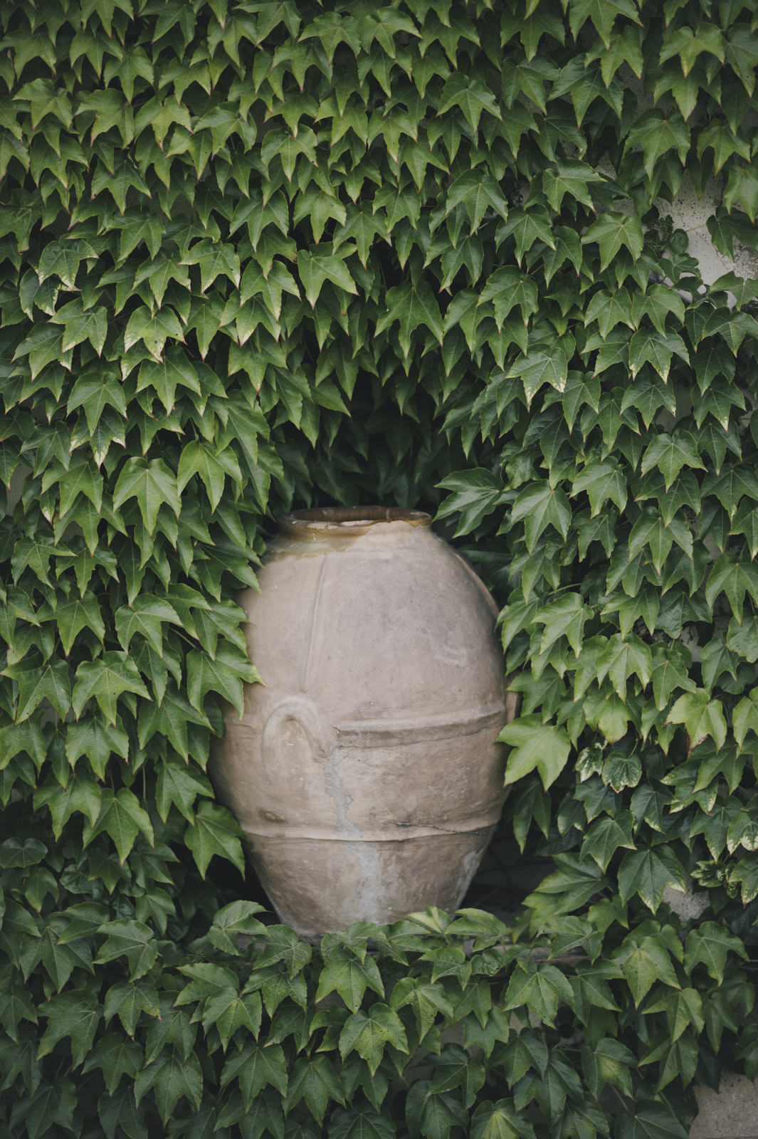 an amphora covered by ivy at villa cimbrone in ravello